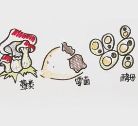 食品有意思:真菌