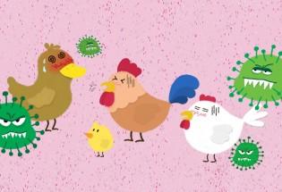 食品有意思:如何预防禽流感病毒感染?