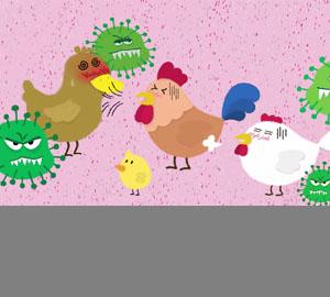 科普视频:如何预防禽流感病毒感染?